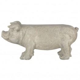 Banca model porc