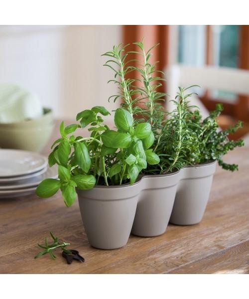 Suport 3 ghivece IVY Herbs Gri cald poza kivi.ro
